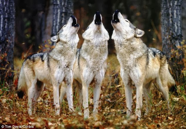 News Leader's Editorial Pages Are Following The Main Stream Media Wolf Pack